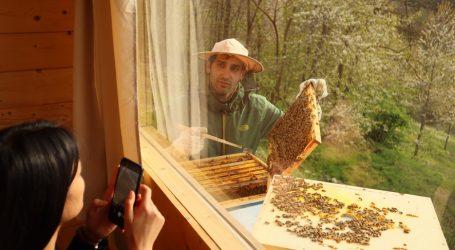 Il profumo e il ronzio delle api fanno bene alla salute